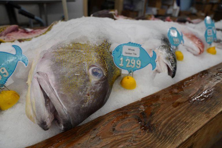 MP Seafood 75 V